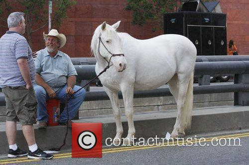 Blaca the horse which will feature in the...