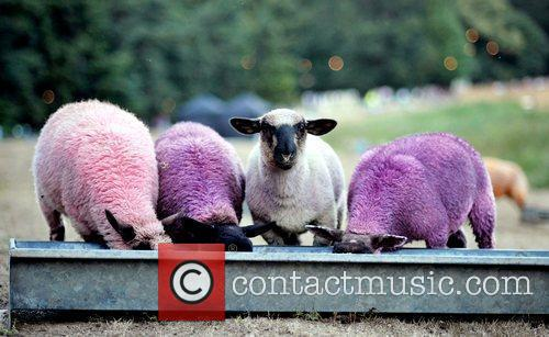 atmosphere of purple sheep feeding from a trough 2926551