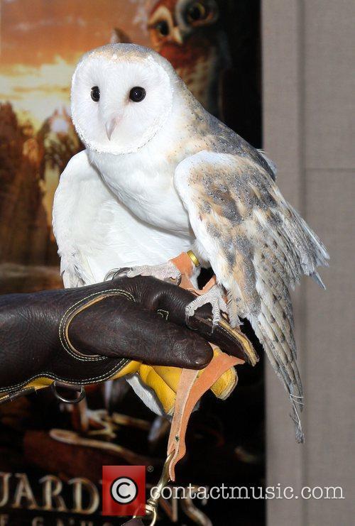 Barn Owl named Twilight,  Los Angeles Premiere...