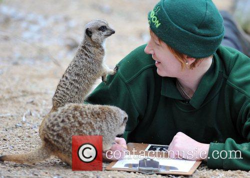 London Zoo annual stock take, during which every...