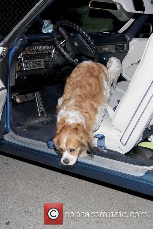 Mischa Barton's dog Mischa Barton leaving Byron &...