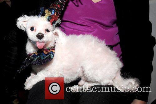 Dog North Shore Animal League's Pre-Westminster Fashion Show...