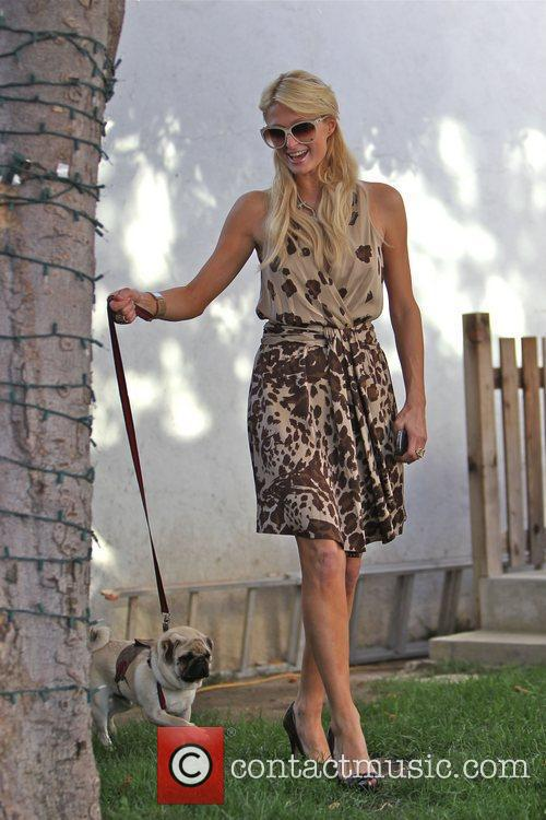 Paris Hilton seen with her newly adopted Pug...