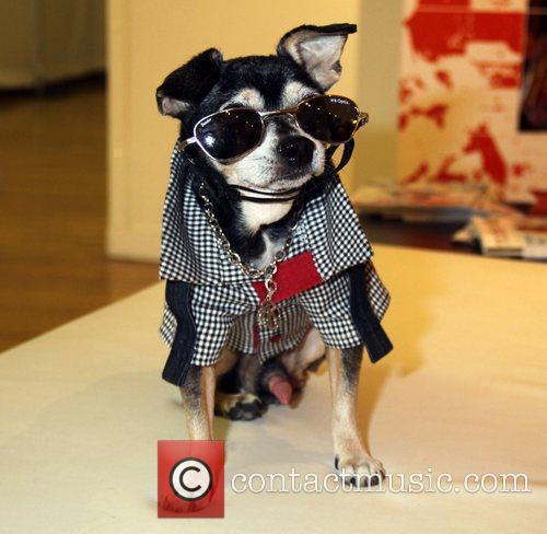 Pet Fashion Week 3
