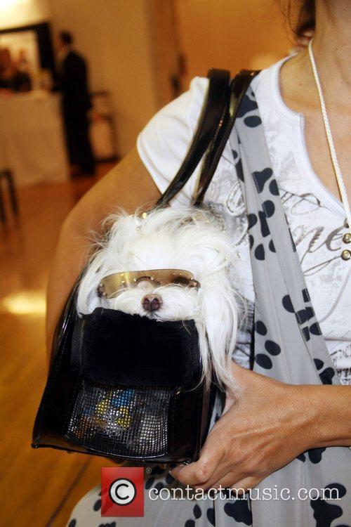 Pet Fashion Week 2
