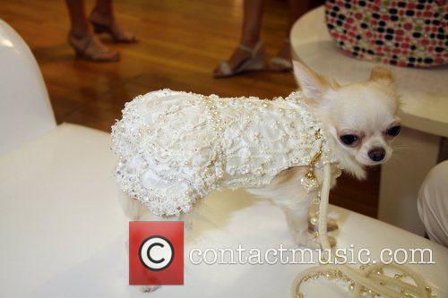 Pet Fashion Week 4