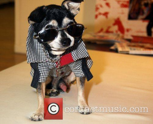 Pet Fashion Week 5