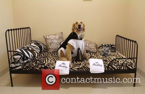 Barkley the Dog The Barkley Pet Hotel &...