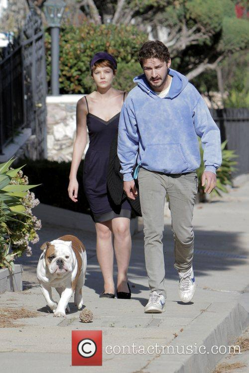 Walk LaBeouf's bulldog near his home in Hollywood