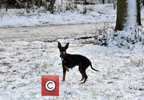 A dog enjoy the snow on Hampstead Heath....