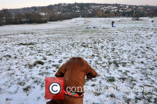 A dog looks on as people enjoy the...