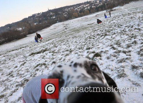 Dogs enjoy the snow on Hampstead Heath. London,...