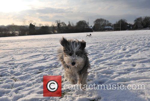 Dogs enjoy the snow on Hampstead Heath.