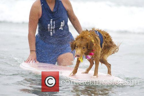 Surf Dog Surf-A-Thon 2010 benefiting the Helen Woodward...