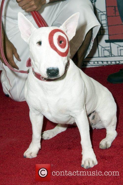 Bullseye The Target Dog 5