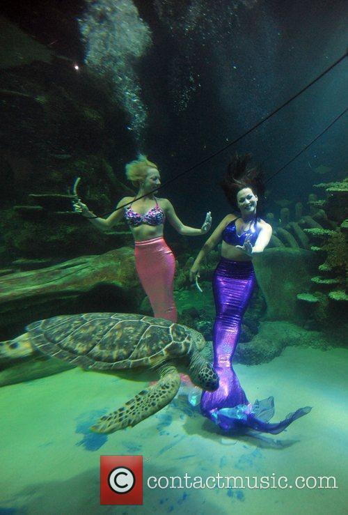 The Weeki Wachee Mermaids swim in to the...
