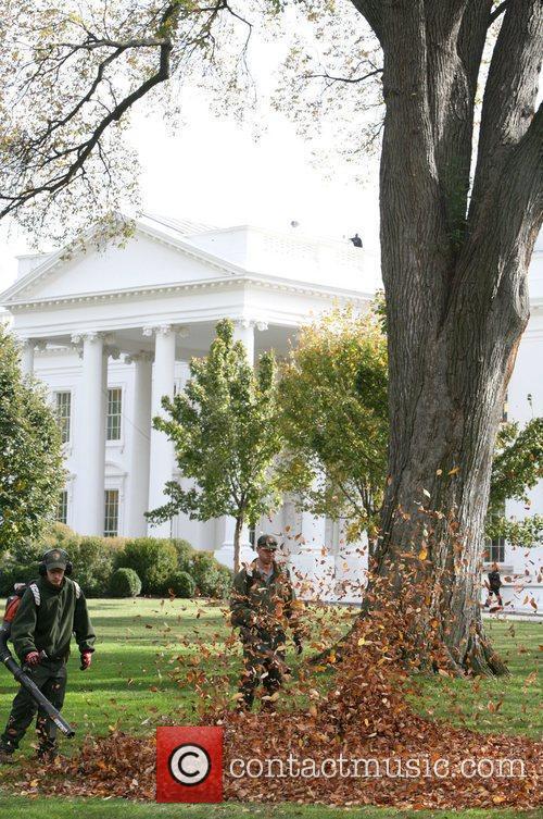 White House 7