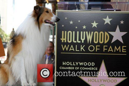 Lassie Bill Geist is Honored with a star...
