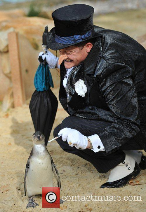 Real life Penguins and The Penguin from the...