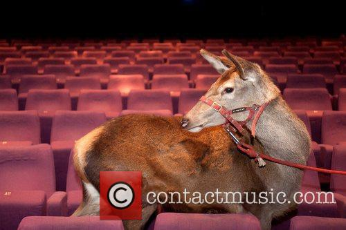 Animals attend a special screening to commemorate the...