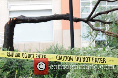 Fallen tree in Long Island City after hurricane...