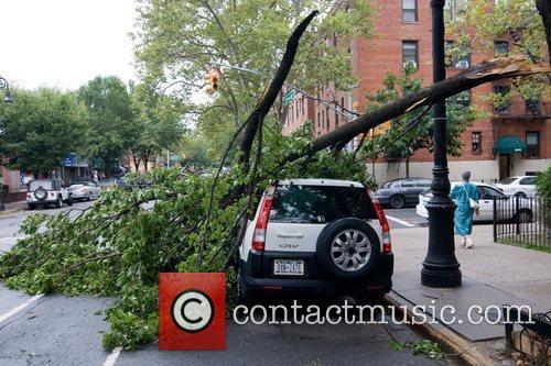 Fallen tree in Queens after hurricane Irene Most...
