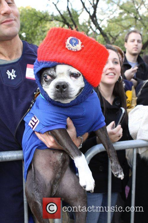 New York Giants dog The 21st Annual Tompkins...