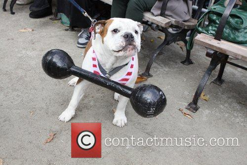 Strongman dog The 21st Annual Tompkins Square Halloween...