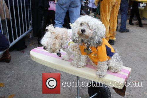 Surfing dog The 21st Annual Tompkins Square Halloween...