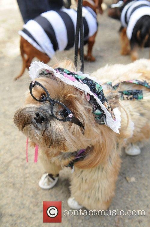 The 21st Annual Tompkins Square Halloween Dog Parade