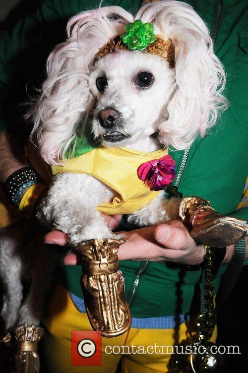 Hec-lin the poodle St. Pawtricks Yappy Hour benefiting...