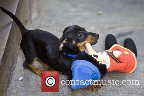 Cheeky Nelly the Dog stole Nicole Snooki Polizzi's...