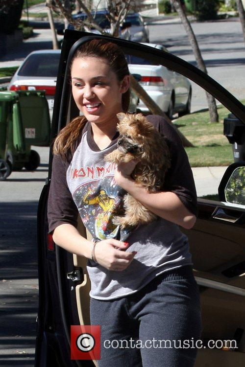 A dressed down Miley Cyrus carries her dog...
