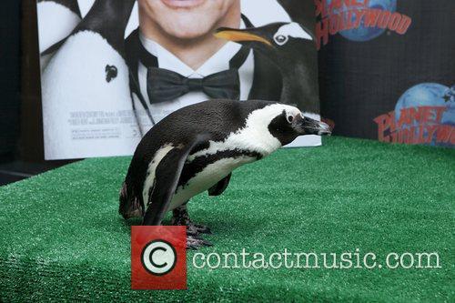 Penguins from the new film 'Mr. Popper's Penguins'...