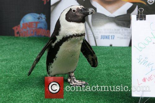 Atmosphere Penguins from the new film 'Mr. Popper's...