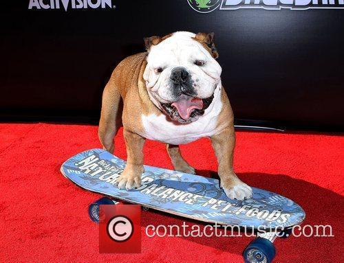 Tillman The Skateboarding Dog Stand Up For Skate...