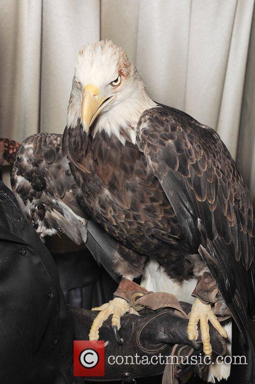 An Eagle The National Wildlife Federation Celebrates 75...