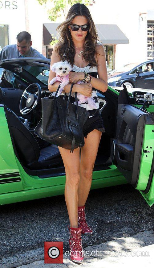 alessandra ambrosio shopping with her dog at 3998015