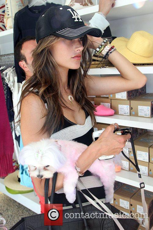alessandra ambrosio shopping with her dog at 3998017