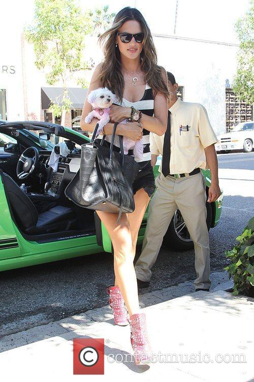 alessandra ambrosio shopping with her dog at 3998022