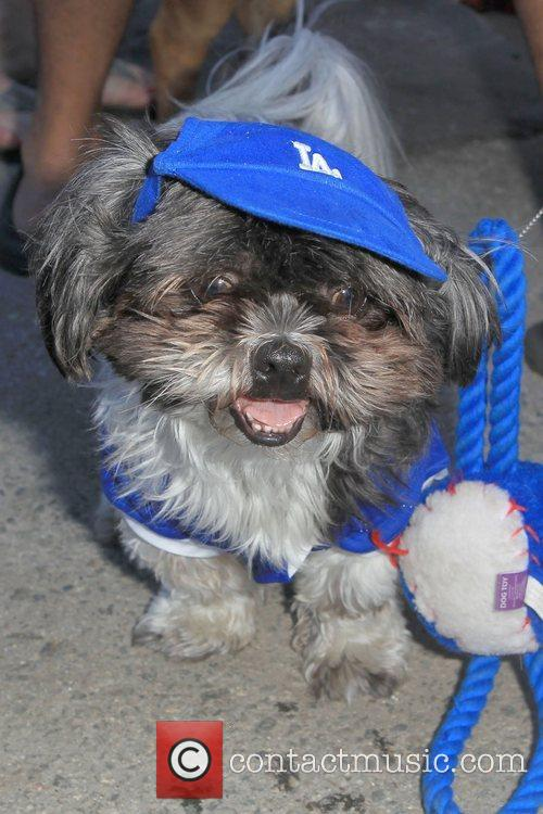 Contestant Dogs Bark in the Park held at...