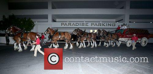 The Budweiser Clydesdales, Hardrock Hotel, Casino During and Show 9