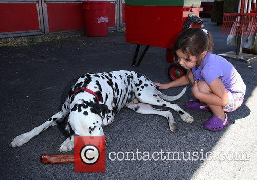 Alexa with Budweiser Dalmatian King Budweiser Clydesdales make...