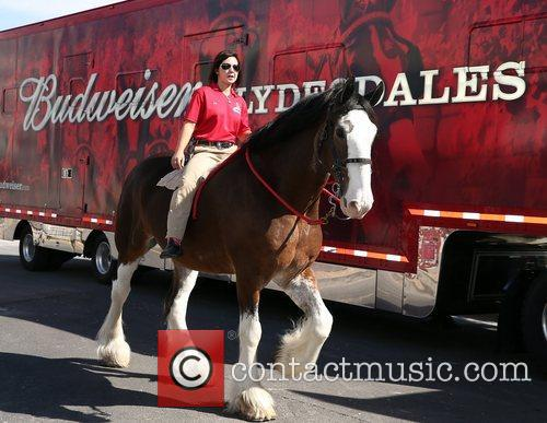 Kat Cockell, Budweiser Clydesdale Sammy Budweiser Clydesdales make...