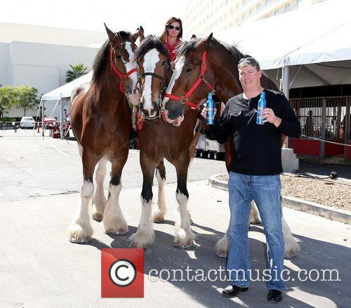 Kat Cockell, Budweiser Clydesdales Fire, Curly and Charley 11