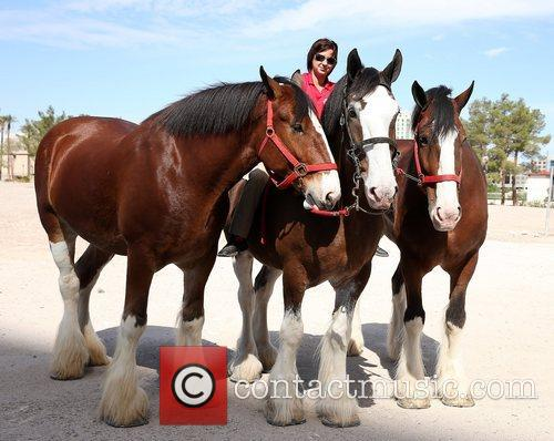 Kat Cockell, Budweiser Clydesdales Tim, Sammy and Sparky 8