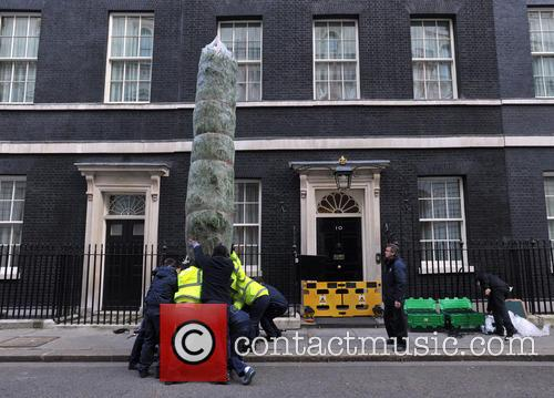 The British Christmas Tree, Christmas, Growers Association and Downing Street 3