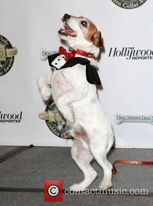 Uggie and Wendy Burch 4