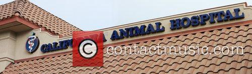 California Animal Hospital sign Los Angeles, California