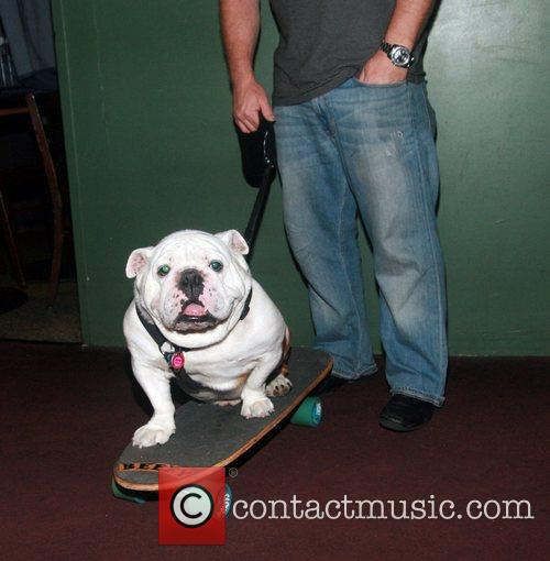 Beefy The Bulldog attend  the Long Island...